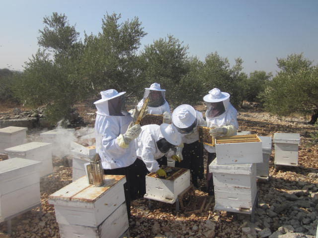 Working with Palestinian farmers