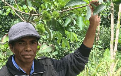Sustainable Farming and Organising Farmer in Timor Leste